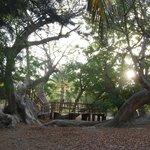 Frühstück im Baobab Baum