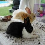 cute bunnies near the poolside