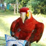 Macaw and Crackers