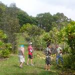 Guided tour of garden