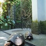 Turtles in the garden of the B&B