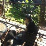 Les chiens du Tacacori (Ulysse)