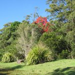Grounds around Binna Burra