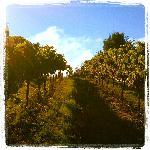 Demarest Hill Winery Foto