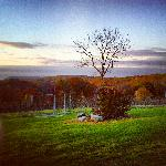 A view of our vinyard in Fall
