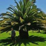Eine wunderschöne Palme