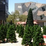 Federation Square, usually arty, not sure about the fake christmas trees