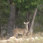 Discovering deer
