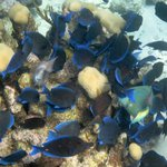 Feeding frenzy on the reef