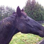 Dante, the black horse!