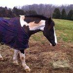 Enjoying some hay