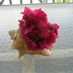 Conch shell with flowers provided by the hotel
