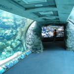 tunnel through the aquarium