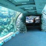 tunnel through the aquarium