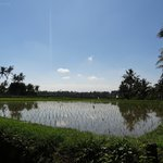 Nearby rice paddies