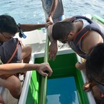 Glass-bottom boat ride, PhP150/pax minimum of 5