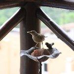 Pássaro fazendo companhia no café da manhã.