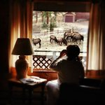 Elk viewing from the Cabin