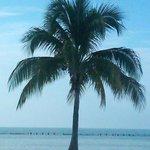 Palm tree at Higgs Beach