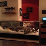 Display fish