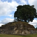 Pyramid ruin with tree on top, at Iximche