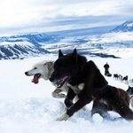 Early summer dogsledding in the mountains