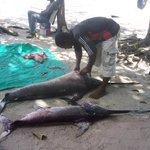 fishing market nungwi