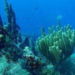 Reef Diversity