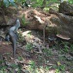 un lagarto en el parque