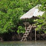 Mangrove Pathway