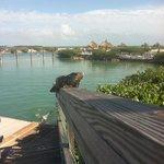 Over looking dolphin lagoon