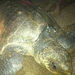 turtle at night on beach