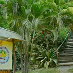 entrance, leading into the jungle