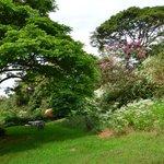 vue dans le jardin