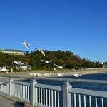 竹島橋に集まるゆりかもめ