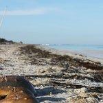 Sus playas paradisiacas aun se mantienen tranquilas