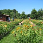 Nass Daylily Farm in July