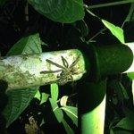 Tarantula sighting on free Night Walk with Nature Guide