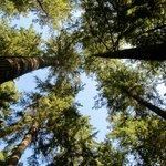 Treetops Adventure at Capilano, Vancouver