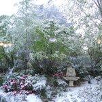 Snow in the garden 2012