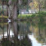 Lakeside from Canoe near beach area.