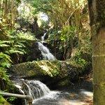 Hawaii Tropical Botanical Garden Stream