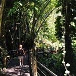 Trail way at Botanical Gardens