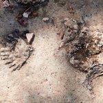 Fossils from Ranger Program