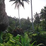 walking in the jungle through the villages