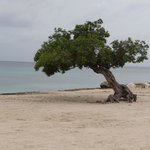 divi tree eagle beach