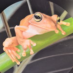 Bruce Zilinsky Frog 1980