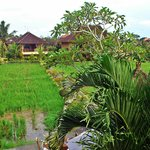 Paddy fields at the back of the hotel