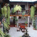 Fern filled courtyard