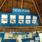 tipi di tartarughe presenti in Kenya